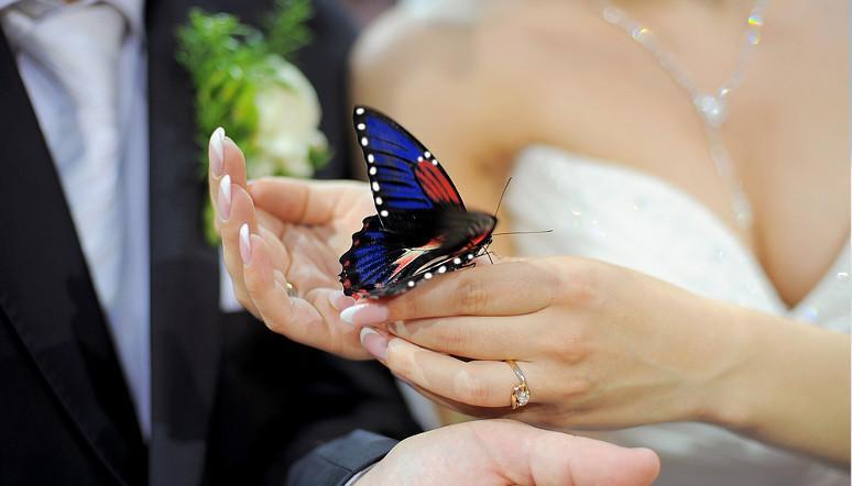 Matrimonio Tema Farfalla : Prodotti tema farfalle shop per accessori e